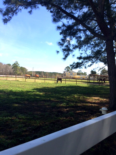 The horses enjoyed the beautiful day too!