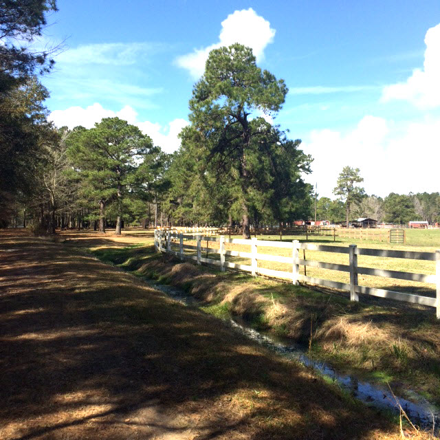 Windwood Farm's fence and surrounding woods.